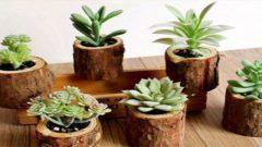 گیاهان آپارتمانی که رسیدگی زیادی نمیخواهند